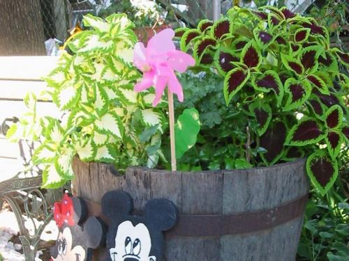 Flowers 2003 03