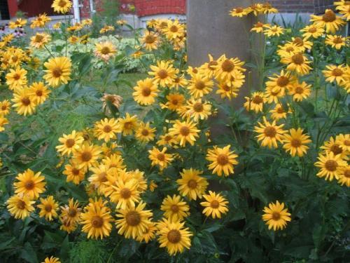 Flower Power 2008